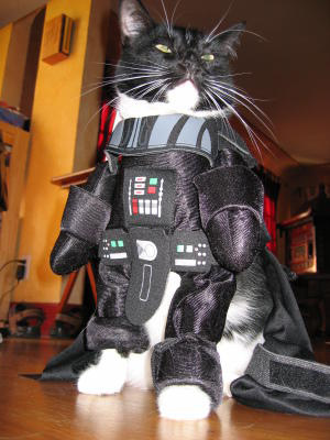 darth-kitty.jpg