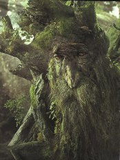 27+Treebeard1.jpg