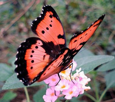 pretty-butterfly.jpg