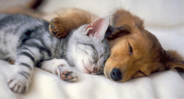 rcp101-kitten-puppy.jpg