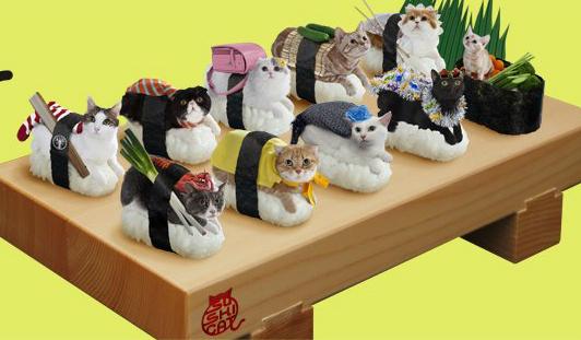 catsushi.jpg
