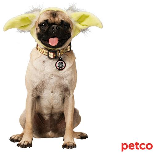 yodaearsdog.jpg