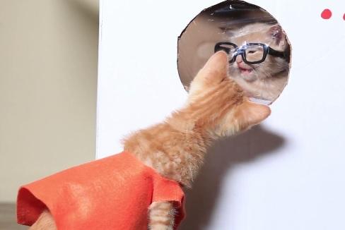 orangeisthenewcat.jpg