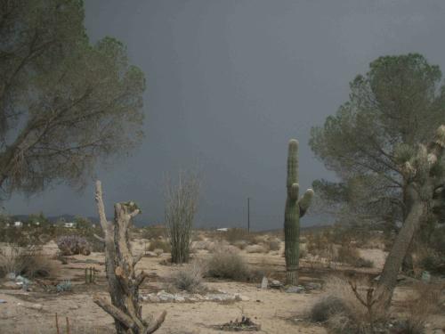 desert_strom.jpg
