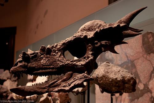 Stygimoloch.jpg
