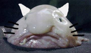 hello_blobfish.jpg