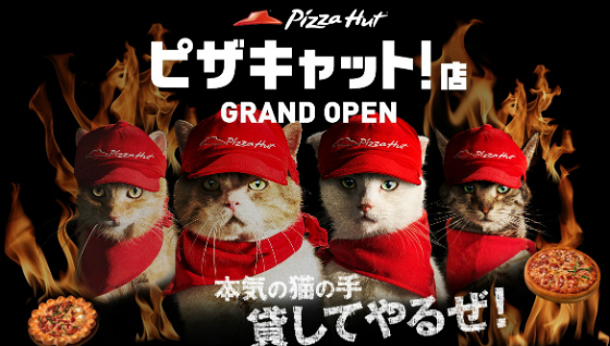 pizza_cat.jpg
