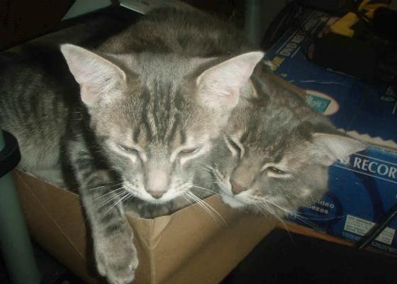 kittenpile3.jpg