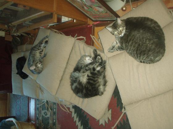 4cats.JPG