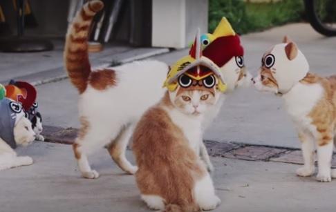 monsterhuntercats.jpg