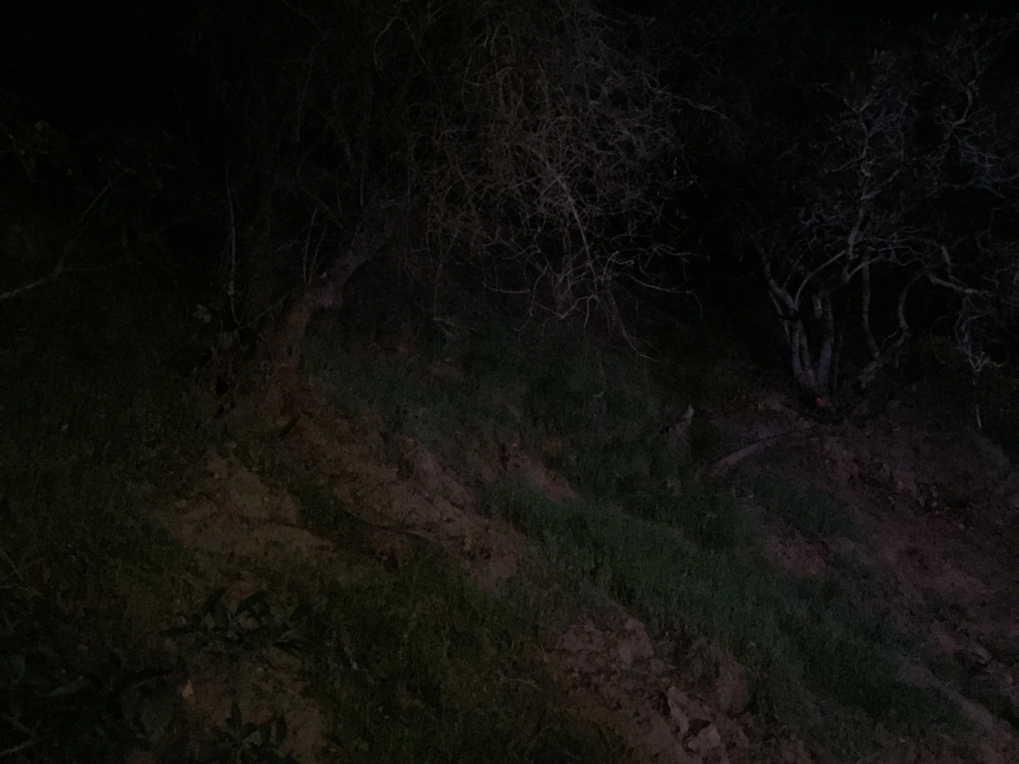 A dark, creepy hillside in Benedict Canyon. (Credit: Liz Ohanesian)