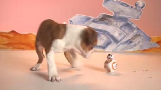 puppybb8.jpg